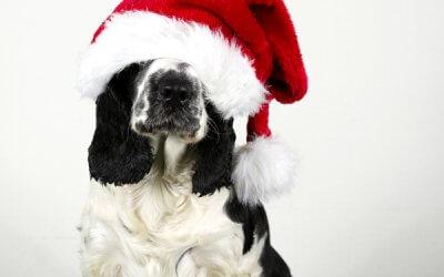 Dags för julannons!